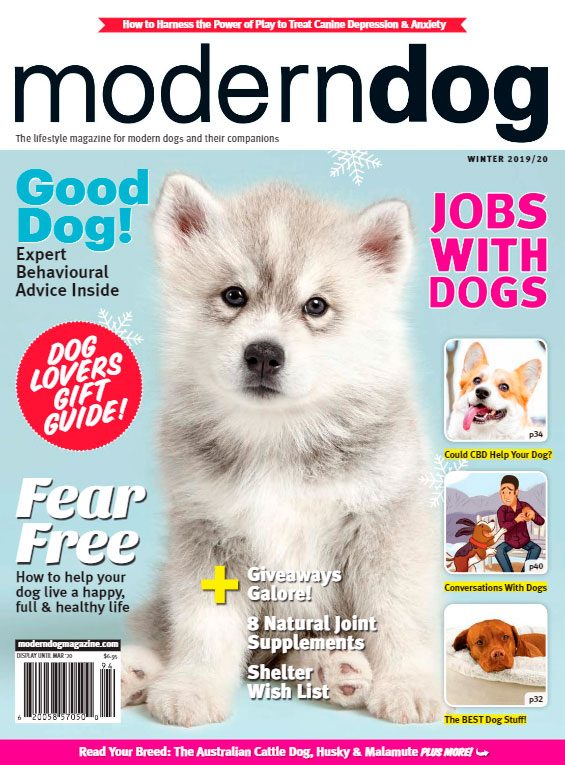 Modern Dog winter 2019/2020
